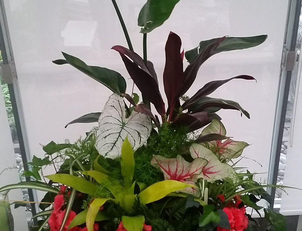 Tropical Shade Containers Call us for more information!