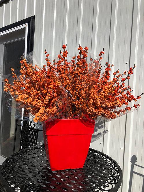 Orange Ilex Branches