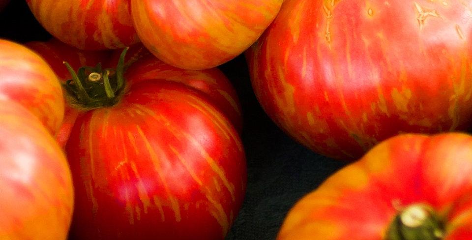Heirloom Big Rainbow Tomato