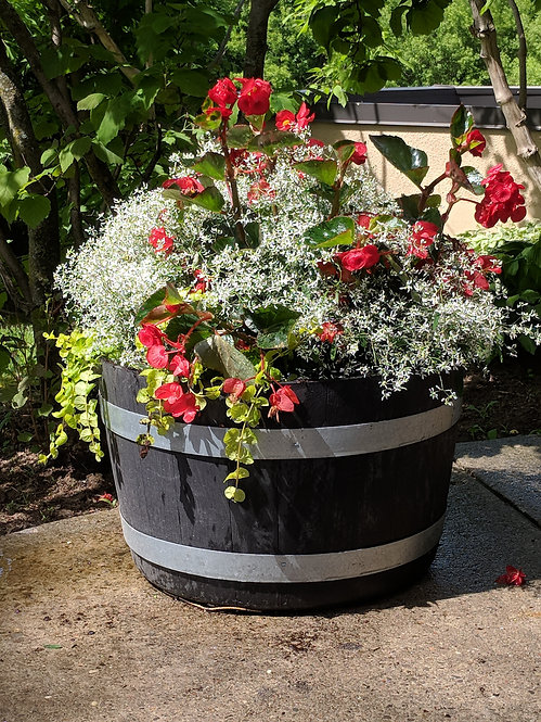 """14"""" Hanging Basket 'Fire and Ice'"""