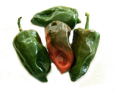 Ancho (Poblano) Mild Hot Pepper