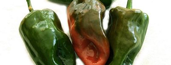 Ancho (Poblano) Mild Hot Pepper