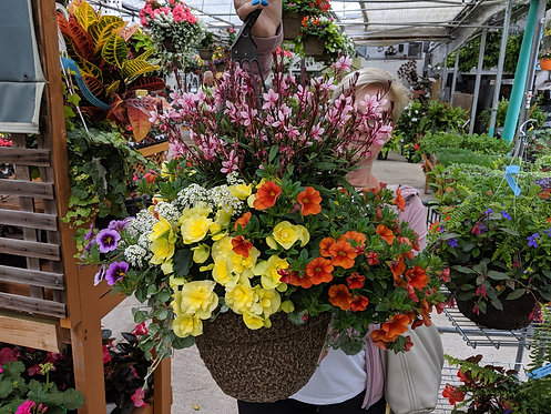 """12"""" Mixed Sun Basket 'Wicked Surprise'"""