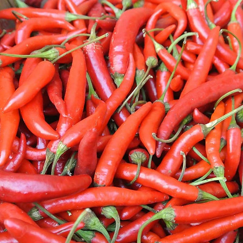 PEPPER HOT  HOT PORTUGAL   Box with 8 Plants