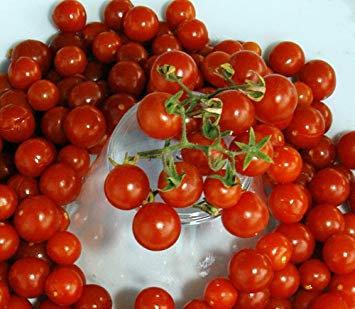 Non-GMO Red Currant Cherry Tomato