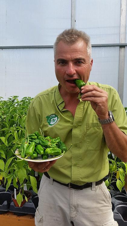 Heirloom Padron Pepper