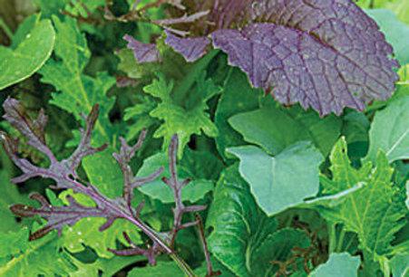 SALAD MIX  WONDER WOK   Box with 8 Plants