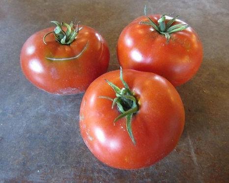 Heirloom Montreal Tasty Tomato