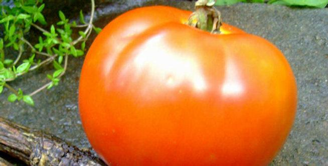 Heirloom St. Pierre Tomato
