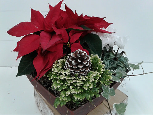 "10"" Vintage Poinsettia Planter"