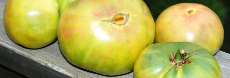 Non-GMO Aunt Ruby's German Green Tomato