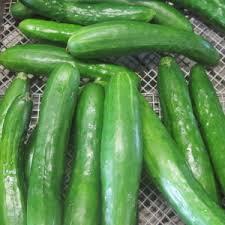 Super Zagross  Cucumber