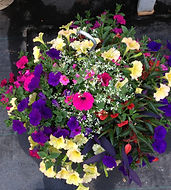 outstanding hanging baskets at black forest garden centre