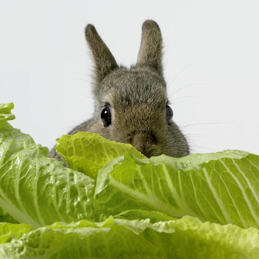 Yummies for Bunnies
