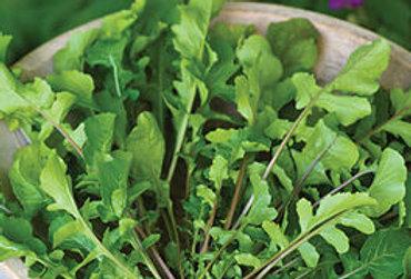 SALAD GREENS  ARUGULA   Box with 8 Plants