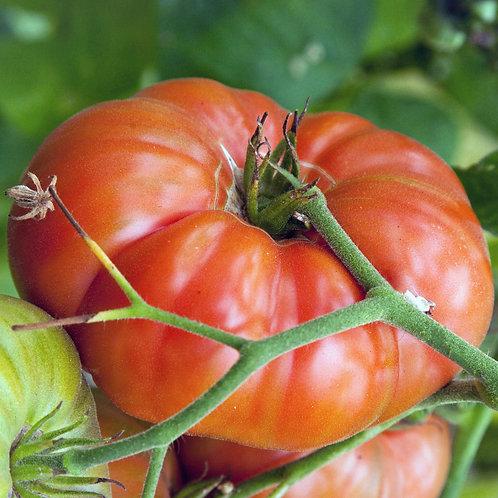 Heirloom Marianna's Peace Tomato