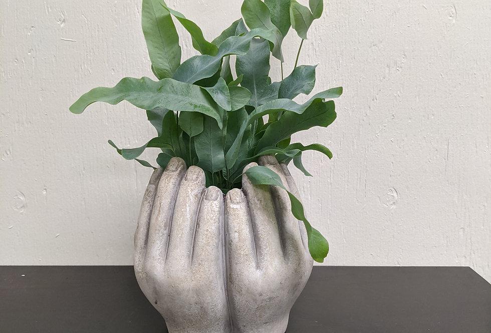 Healing Hands includes Fern