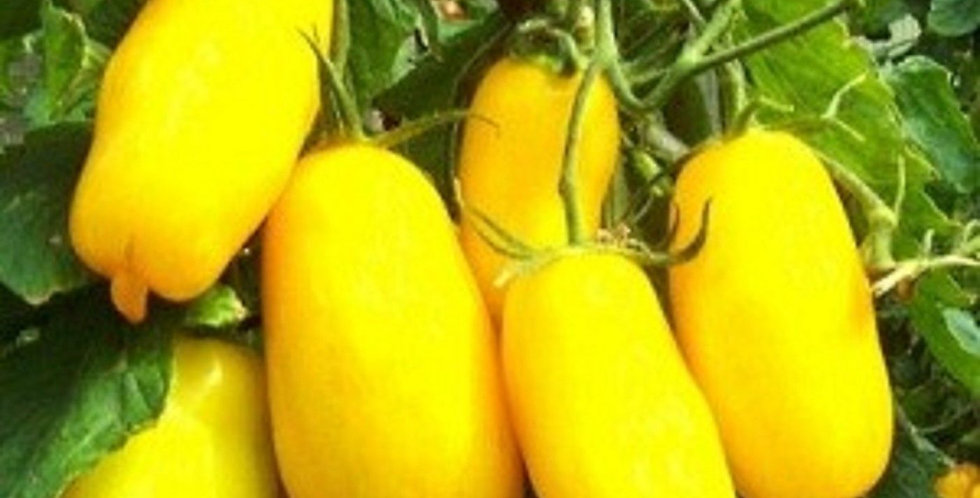 Heirloom Banana Legs Tomato