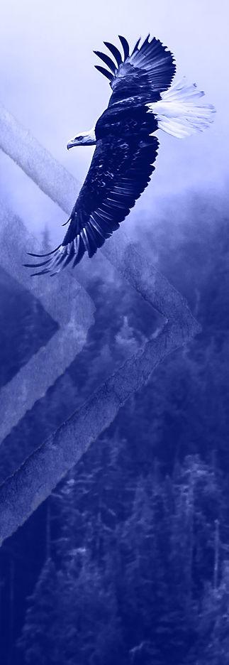 contactus_eagle.jpg