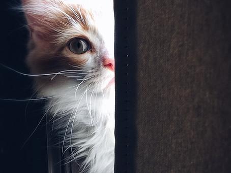L'identification des chiens et des chats obligatoire sous peine d'amende