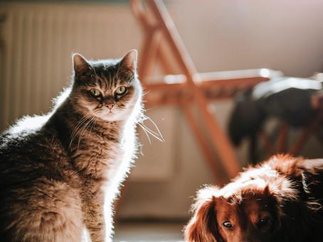 Adoption en 1ère lecture de la proposition de loi sur la lutte contre la maltraitance animale