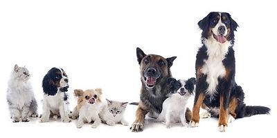 Les animaux peut-ils être défendus ?