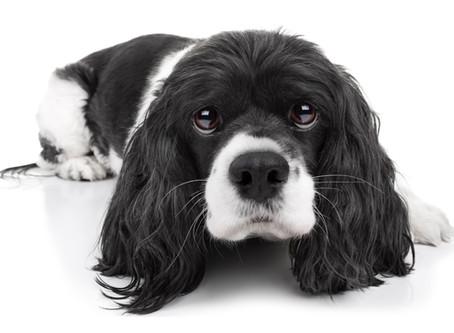 6 mois de prison ferme pour avoir battu son chien