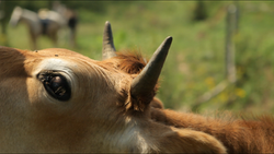 COW-THOU_WAST_MILD_AND_LOVELY_dir_Josephine_Decker_DP_+Ashley_Connor+copy.png