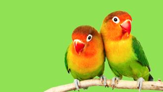 Couple : Mieux s'entendre & se comprendre