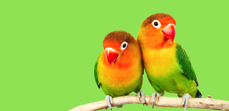Love Birds, How to find your colour love, The Image tree blog