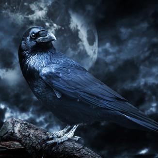 Crow Creation.