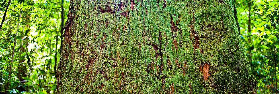 Amazônia. Impressão 30x40cm. Papel Hahnemühle. REF: 5300