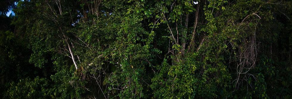 Amazônia. Impressão 30x40cm. Papel Hahnemühle. REF: 4900