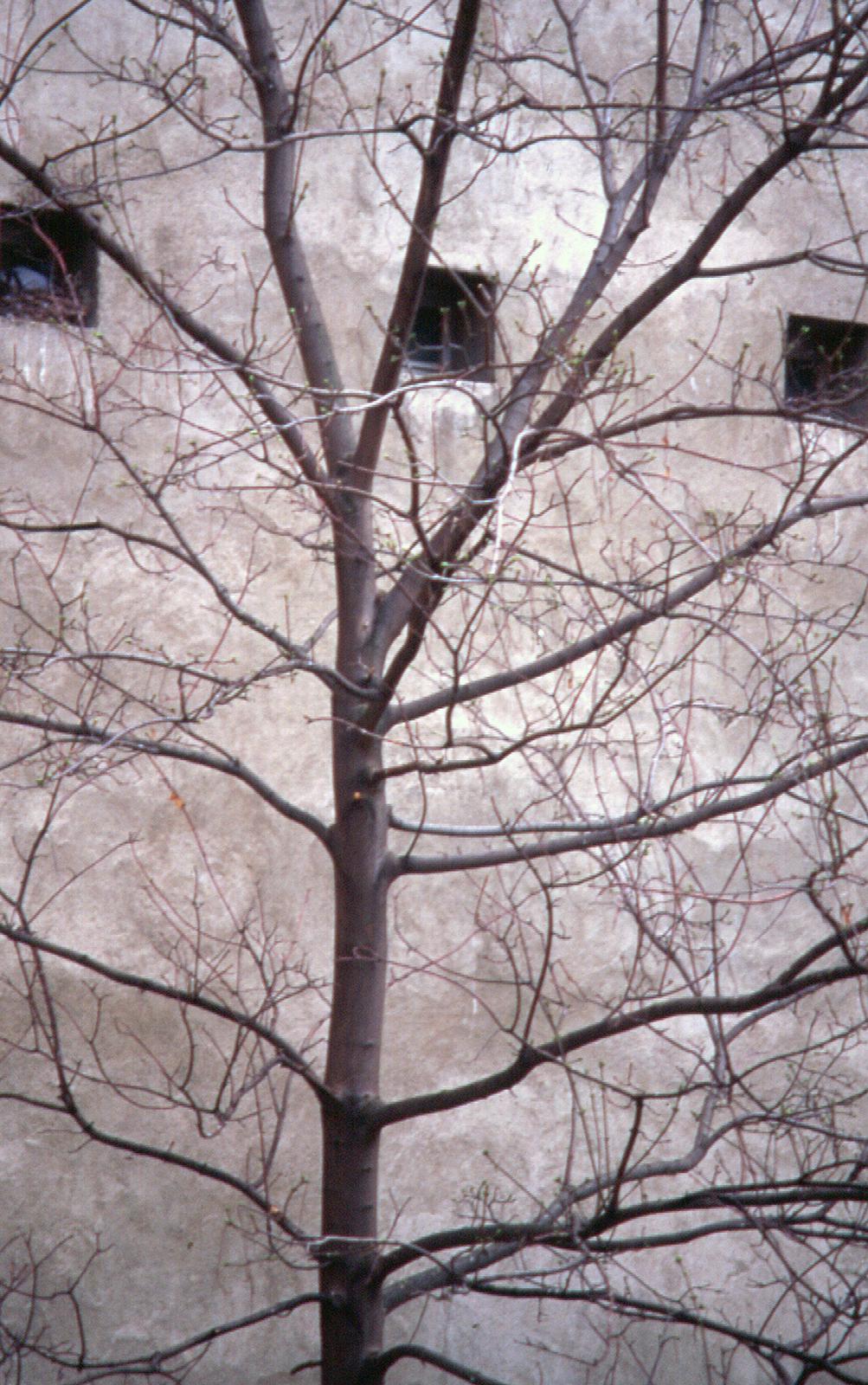 001 - PSD - Arbol y ventanas retocado PEQ