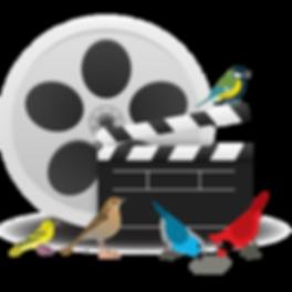Wild-Bird-Movie-Night-graphic.png