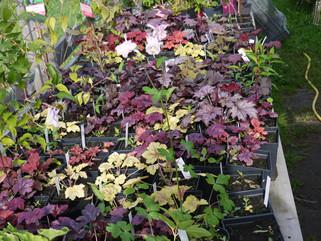 Torse Plantskola och Plantshop