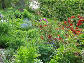 Trädgård vi besöker på sommarresan