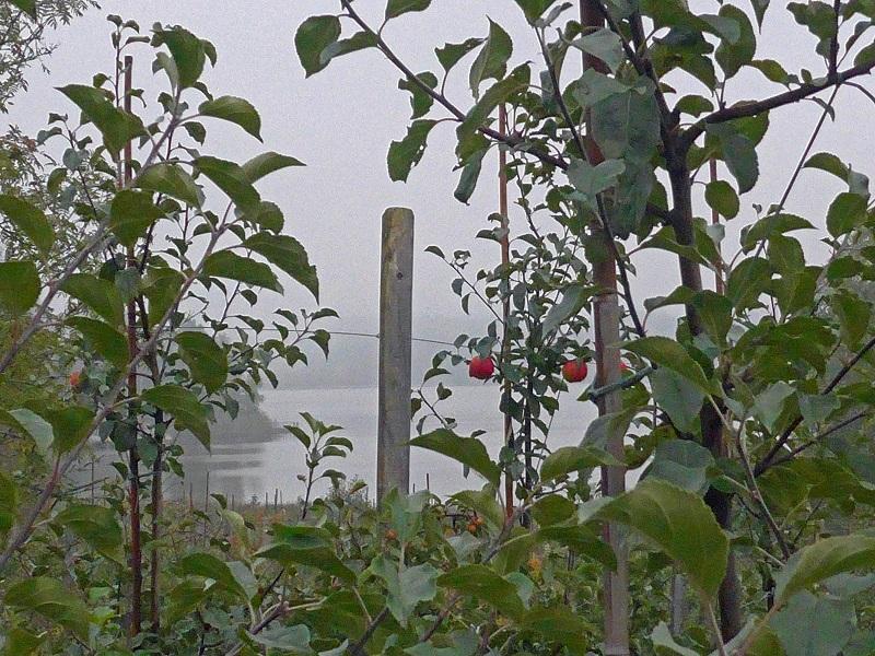 16_Utsikt_genom_äppelträd