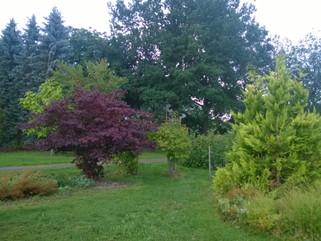 En fantastisk trädgård