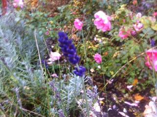 Lite blommar ännu