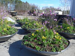 Bilder från besöket i växthuset