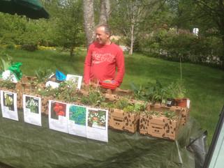 Växtförsäljning Rosenforsparken