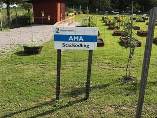 Besök på AMA Stadsodling