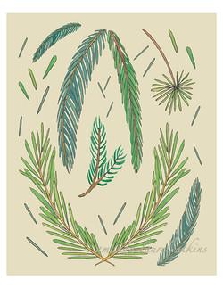 Pine Study