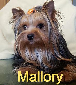Mallory_edited.jpg