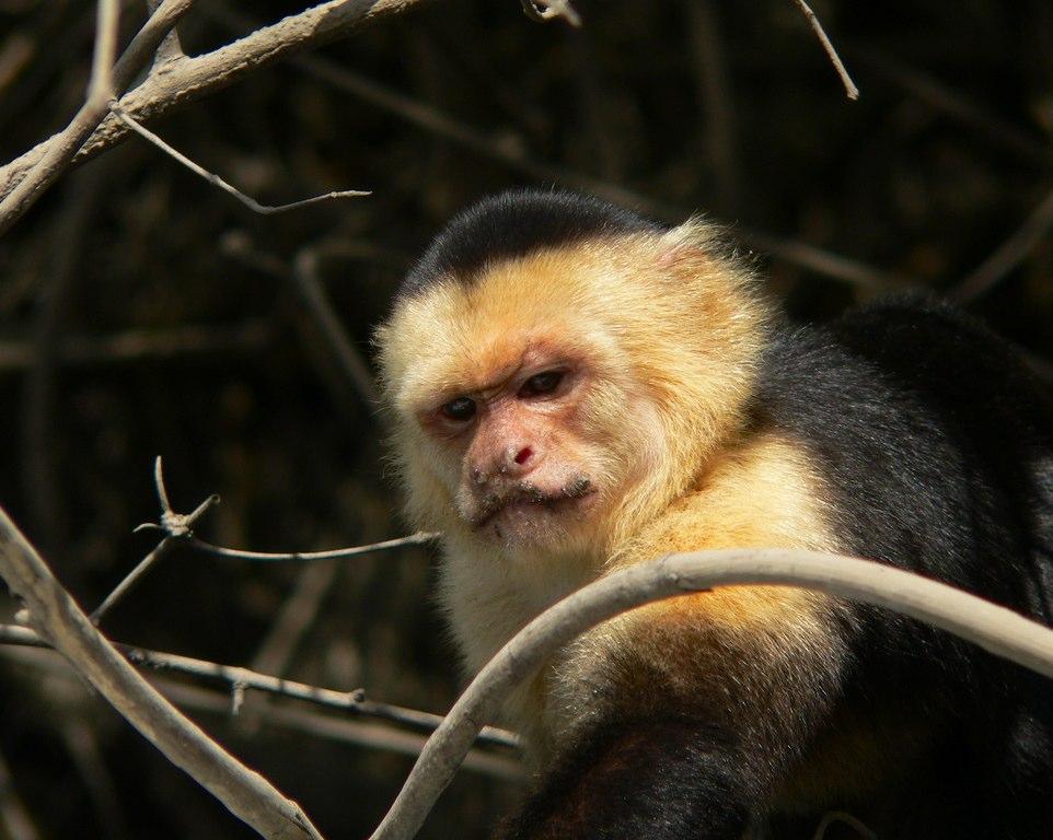 Squirell Monkey | Tempisque Tour