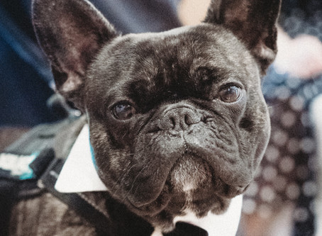 Ring-bearing dogs, and other ways to personalise your wedding...