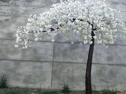 WEEPING IVORY BLOSSOM ARCH TREE