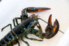 Lobsters on the Boat_13.jpg