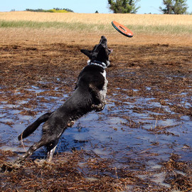 shilo frisbee.jpg